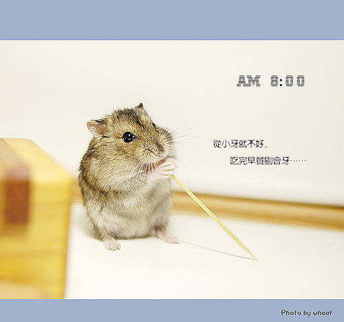 可爱的小仓鼠