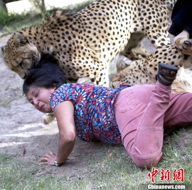 Scottish tourist attacked by cheetahs in South Africa